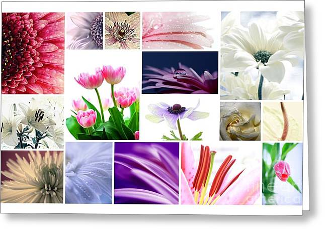 Macro Flower Photography Greeting Cards - Collage 2 Greeting Card by SK Pfphotography