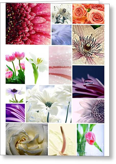 Macro Flower Photography Greeting Cards - Collage 3 Greeting Card by SK Pfphotography
