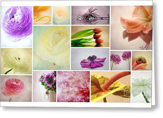 Macro Flower Photography Greeting Cards - Collage 4 Greeting Card by SK Pfphotography