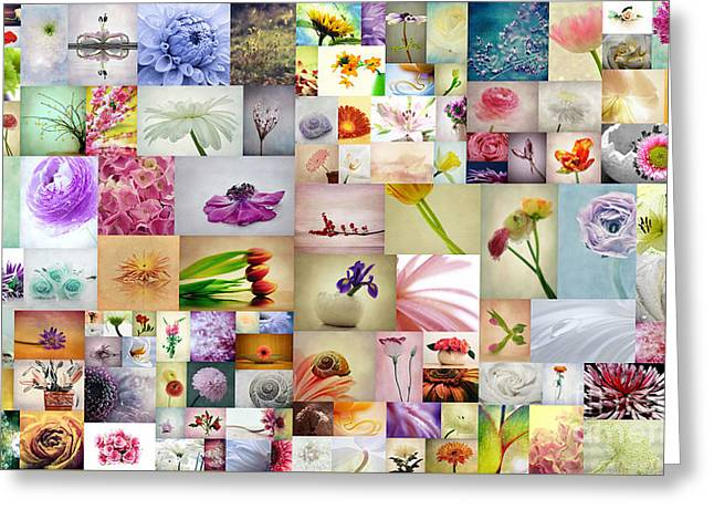 Macro Flower Photography Greeting Cards - Collage 5 Greeting Card by SK Pfphotography