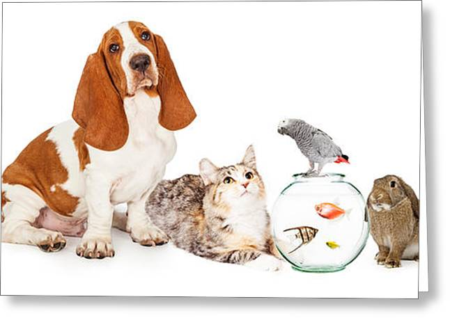 Collage Of Domestic Pets Together Greeting Card by Susan Schmitz
