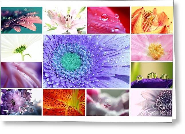 Macro Flower Photography Greeting Cards - Collage  Greeting Card by SK Pfphotography