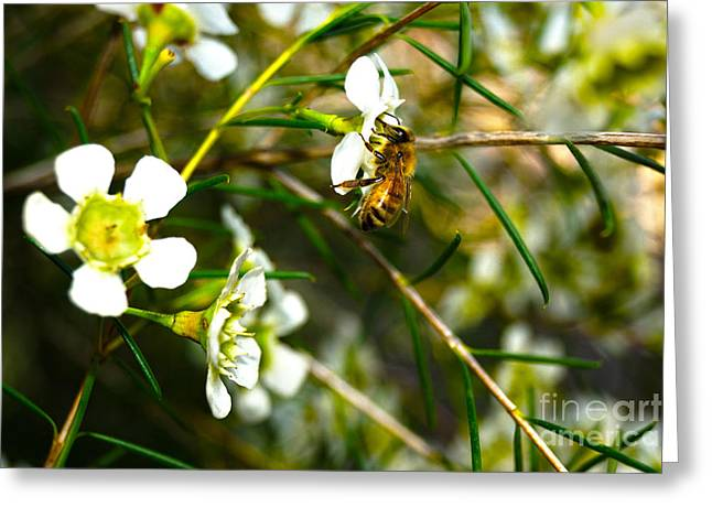 Collecting Pollen Greeting Card by Cassandra Buckley