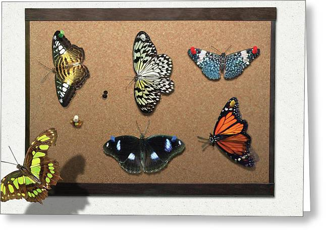 Collector - Lepidopterist - My Butterfly Collection Greeting Card by Mike Savad