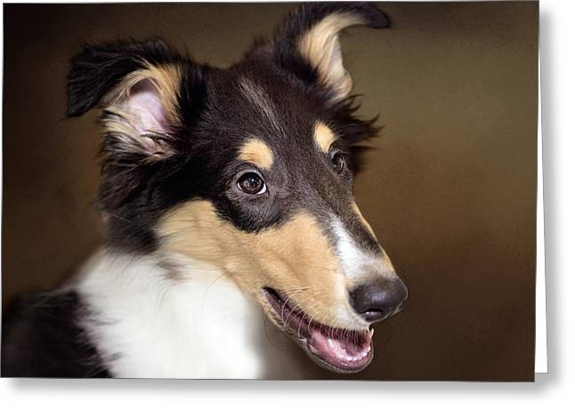 Working Dog Greeting Cards - Collie - Dog Greeting Card by Sharon Norman
