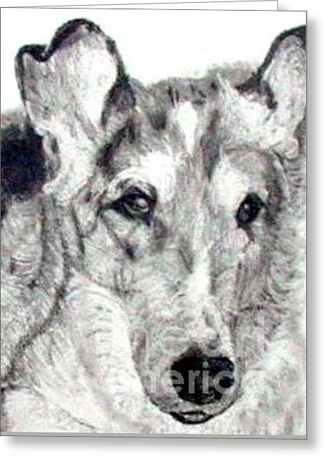 Smooth Drawings Greeting Cards - Collie Smooth Lover Greeting Card by Susan A Becker