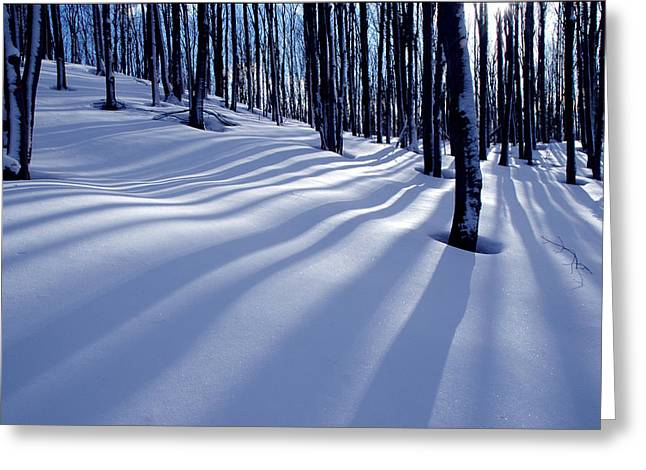 Collingwood Trees Greeting Card by Peter Bowers