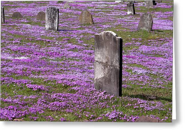Colonial Tombstones Amidst Graveyard Phlox Greeting Card by John Stephens