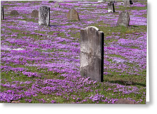 Final Resting Place Greeting Cards - Colonial Tombstones Amidst Graveyard Phlox Greeting Card by John Stephens