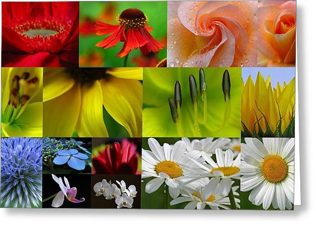 Flower Artwork Greeting Cards - Color Emotion Greeting Card by Juergen Roth