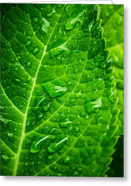 Waterdrops Photographs Greeting Cards - Color in Green Greeting Card by Parker Cunningham