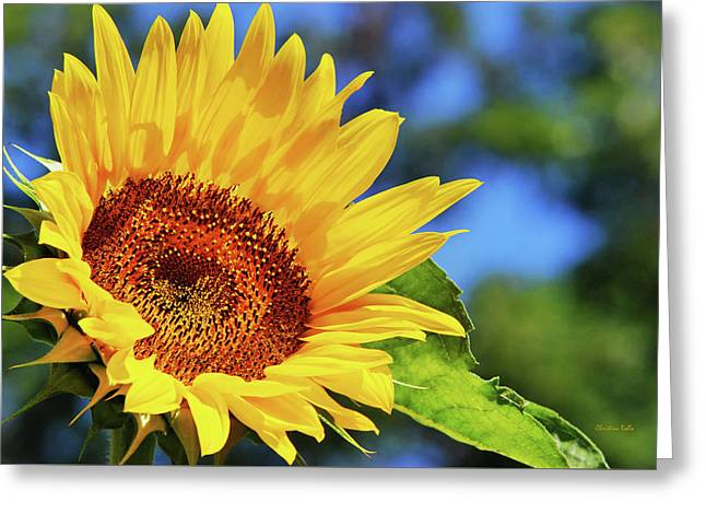 Color Me Happy Sunflower Greeting Card by Christina Rollo