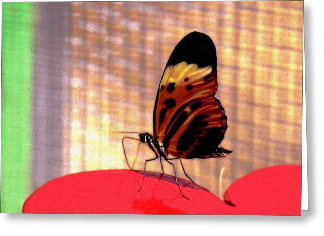 Cocoon Greeting Cards - Color of Flight Greeting Card by Greg Dillon