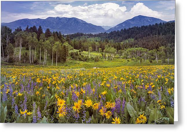 Color Of Spring Greeting Card by Leland D Howard