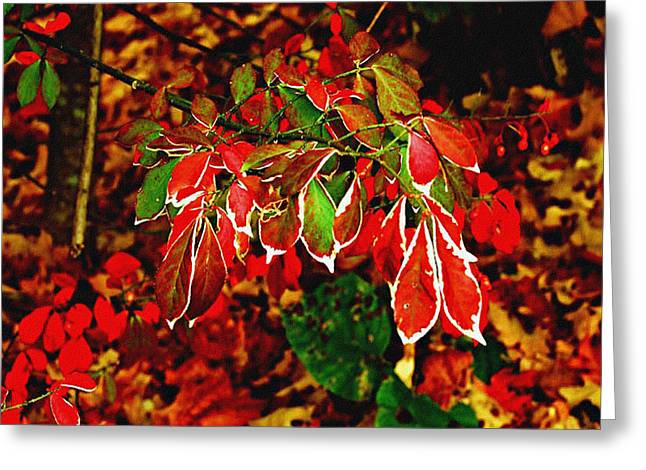 Color Enhanced Greeting Cards - Color Pop Forest Scene Greeting Card by Carol F Austin