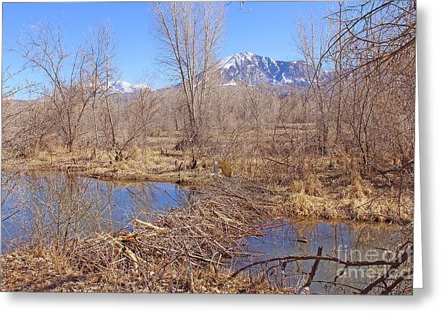 North Fork Digital Greeting Cards - Colorado Beaver Ecosystem Greeting Card by Dale Jackson