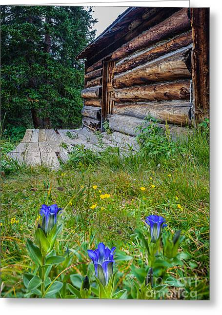 Log Cabins Greeting Cards - Colorado Cabin Greeting Card by Steven Reed