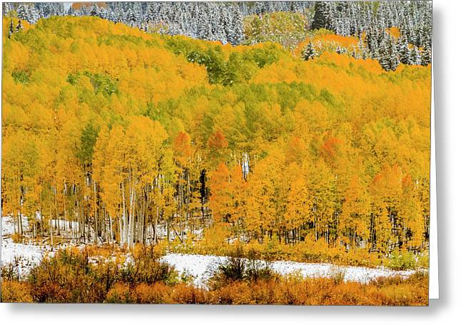 Colorado Fall Color In The Snow Greeting Card by Teri Virbickis