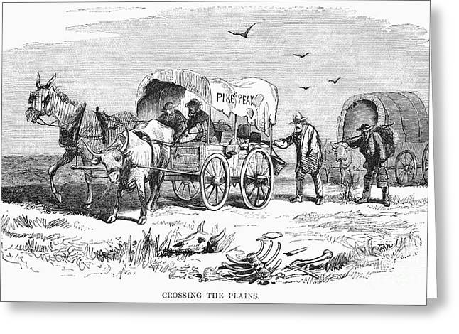 Prospector Greeting Cards - Colorado Gold Rush, 1859 Greeting Card by Granger