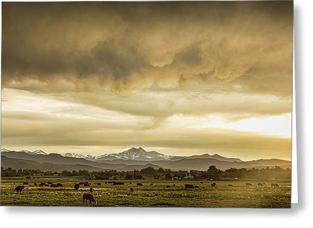 Colorado Grazing Greeting Card by James BO Insogna