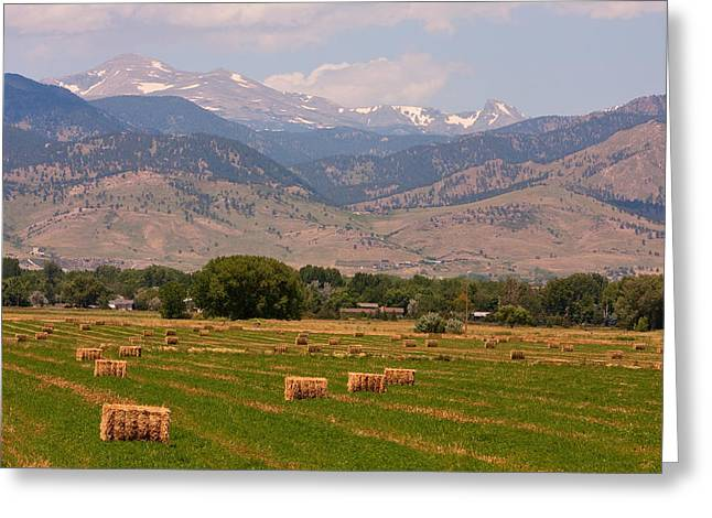 Bale Greeting Cards - Colorado Hay  Greeting Card by James BO  Insogna