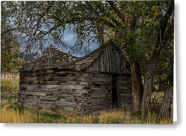 Colorado Log Cabin Greeting Card by Paul Freidlund