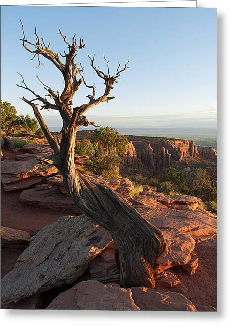 Unique View Greeting Cards - Colorado National Monument Tree Greeting Card by Aaron Spong