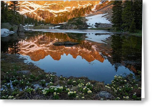 Reflection In Water Greeting Cards - Colorado Reflection - Willow Lakes Greeting Card by Aaron Spong