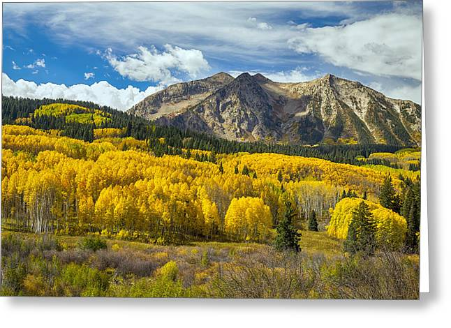 Print Photographs Greeting Cards - Colorado Rocky Mountain Fall Foliage  Greeting Card by James BO  Insogna