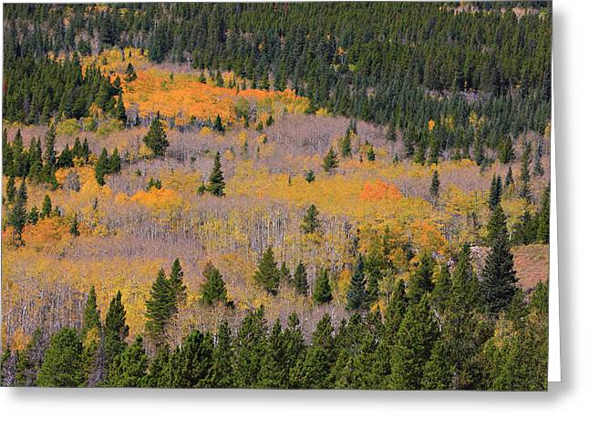 Striking Images Greeting Cards - Colorado Rocky Mountains Autumn Colors Greeting Card by James BO  Insogna