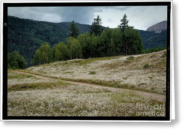 Close Focus Nature Scene Greeting Cards - Colorado Summer White Greeting Card by Janice Rae Pariza