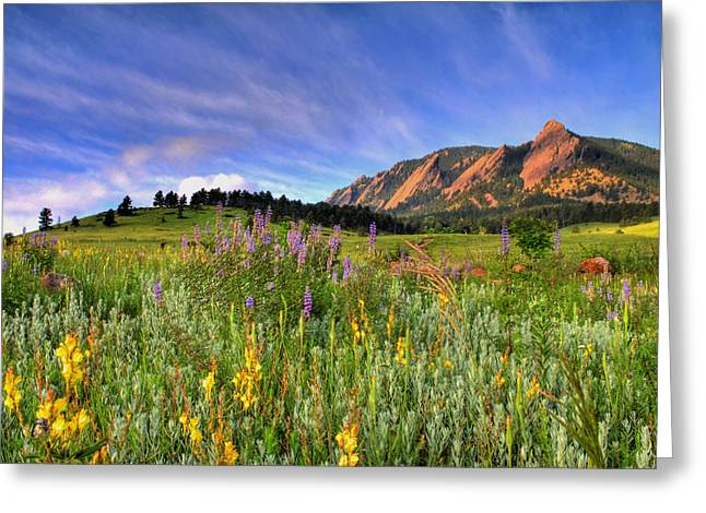 Cloudy Greeting Cards - Colorado Wildflowers Greeting Card by Scott Mahon
