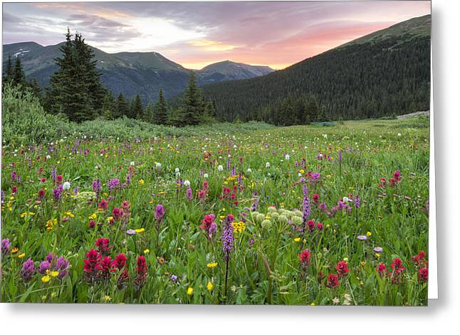 Berthoud Greeting Cards - Colorado Wildflowers Sunrise at Butler Gulch 5 Greeting Card by Rob Greebon