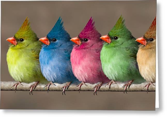John Haldane Greeting Cards - Colored Chicks Greeting Card by John Haldane