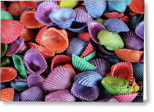 Colored Sea Shells Greeting Card by Paulette Thomas