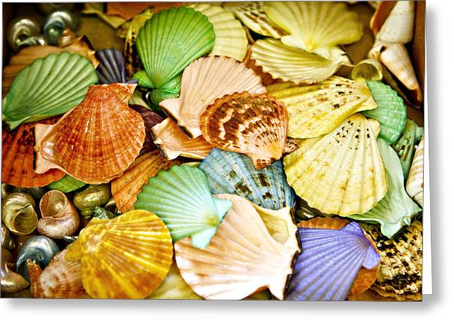 Colored Shells Greeting Card by Marilyn Hunt