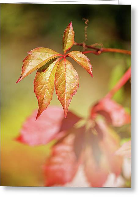 Colorful Autumn Greeting Card by Cindy Grundsten