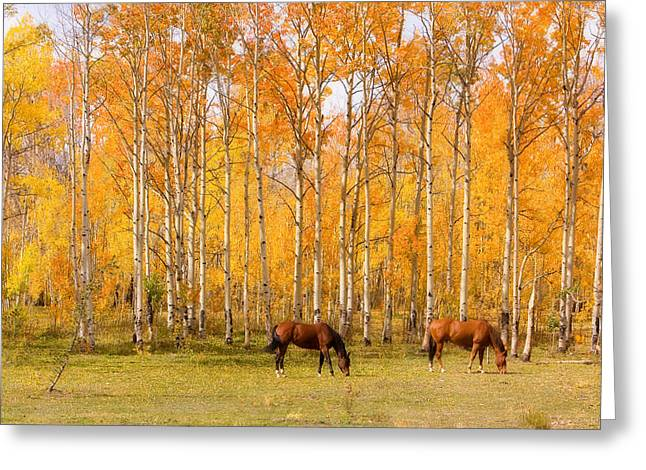 Colorful Autumn High Country Landscape Greeting Card by James BO  Insogna