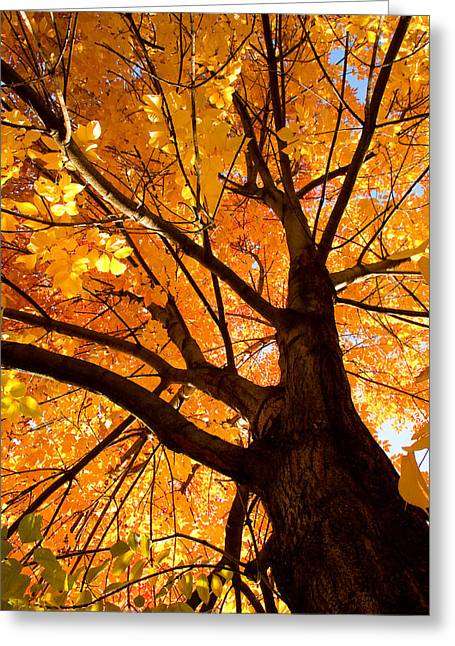 Lightning Gifts Greeting Cards - Colorful Autumn Looking Up Greeting Card by James BO  Insogna