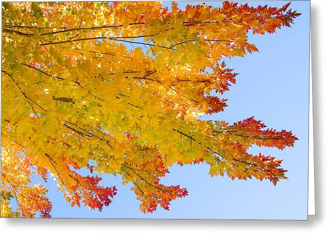 Autumn Prints Greeting Cards - Colorful Autumn Reaching Out Greeting Card by James BO  Insogna
