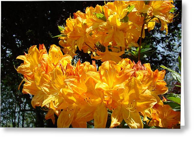 Rhodie Greeting Cards - Colorful Bright Flowers art print Orange Yellow Rhodies Floral Baslee Troutman Greeting Card by Baslee Troutman