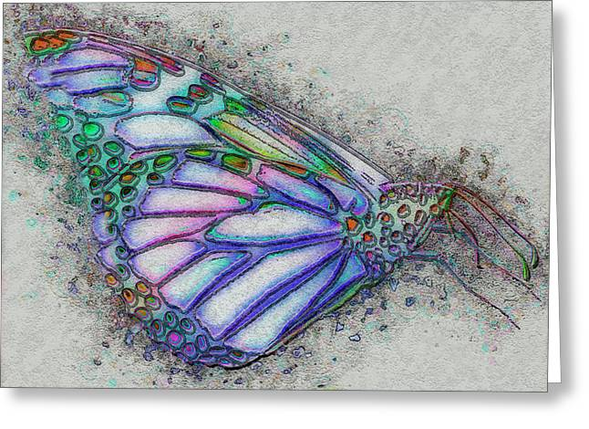 Colorful Butterfly Greeting Card by Jack Zulli