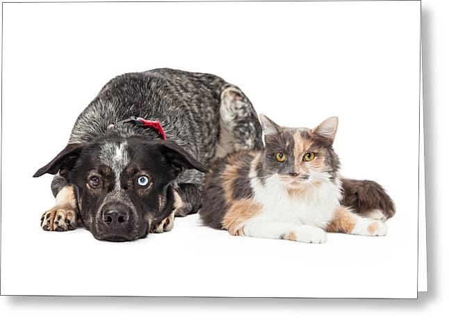 Colorful Cattle Dog And Calico Cat Greeting Card by Susan Schmitz