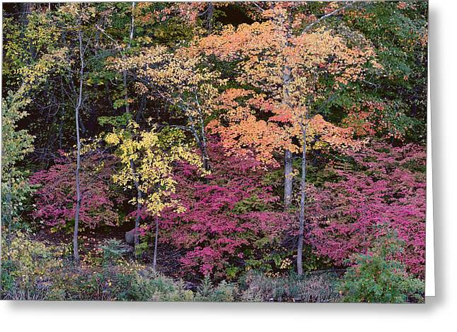 Colorful Fall Foliage Greeting Card by Rona Black