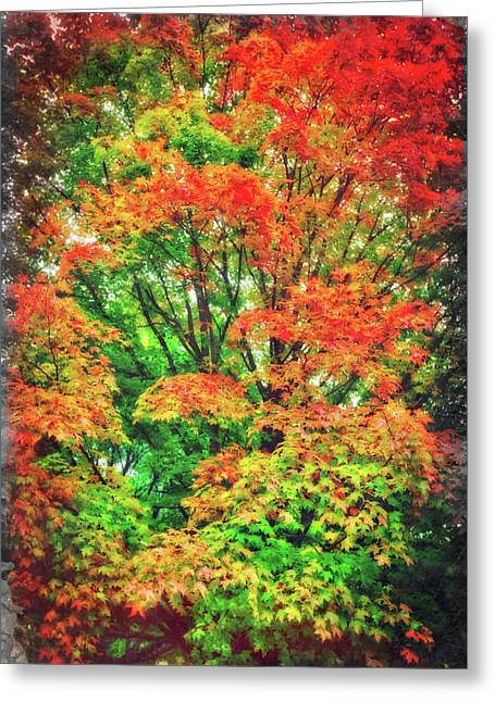 Colorful Fall Tree Leaves Greeting Card by Jennifer Rondinelli Reilly - Fine Art Photography