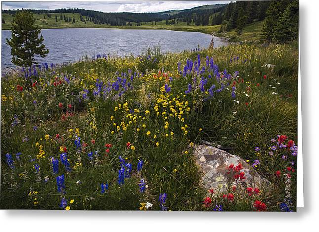 Lake Walden Greeting Cards -  Dumont Lake colorful flowers Greeting Card by Dave Dilli