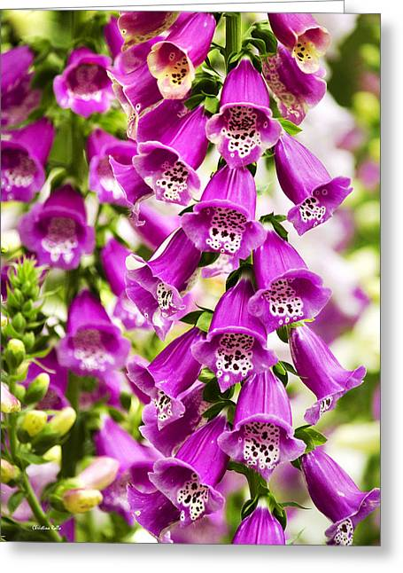 Foxglove Flowers Photographs Greeting Cards - Colorful Foxglove Flowers Greeting Card by Christina Rollo