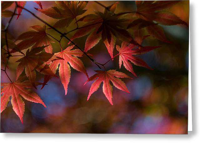 Colorful Japanese Maple Greeting Card by Lori Coleman