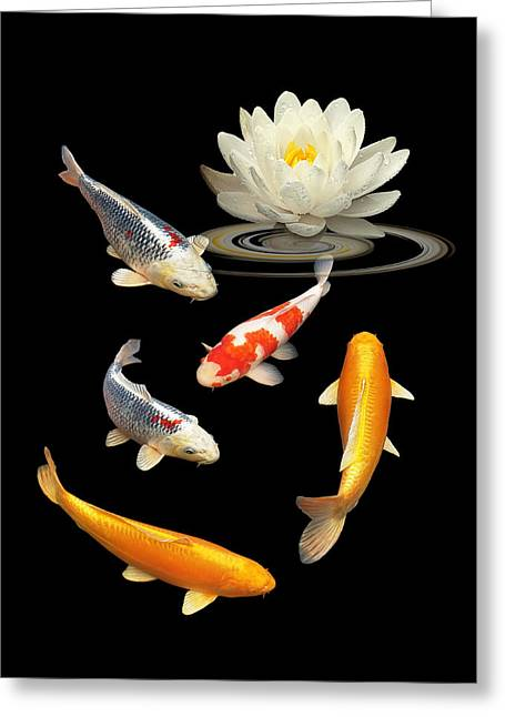 White Waterlily Greeting Cards - Colorful Koi With Water Lily Greeting Card by Gill Billington