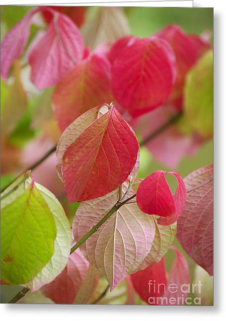 Angela Doelling Ad Design Photo And Photoart Greeting Cards - Colorful leafs  Greeting Card by Angela Doelling AD DESIGN Photo and PhotoArt
